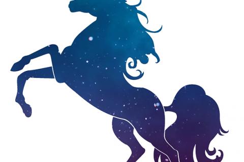 Start-up: Auf der Suche nach dem Einhorn