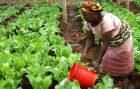 Zukunftsmarkt Afrika