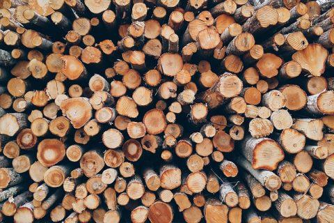 Holz wächst weiter